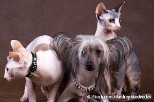 Perros y Gatos Sin Pelo