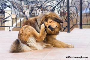 Picazón en los Perros