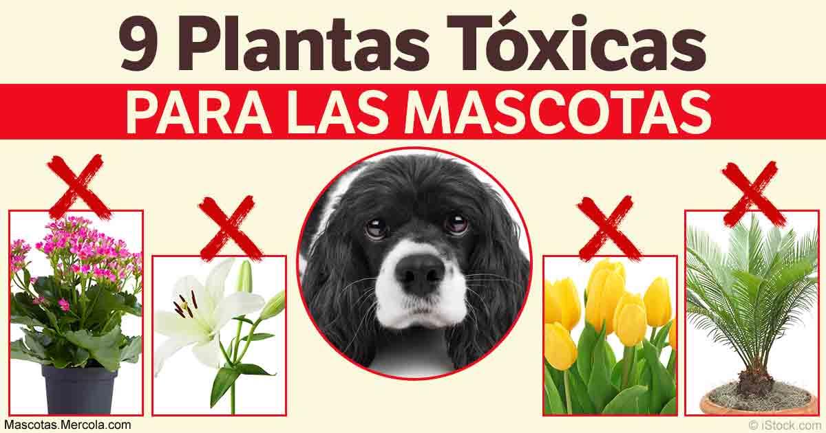 Mant N A Tu Mascota Lejos De Estas Plantas Nocivas