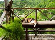 Why Your Cat Needs a Cat Patio, or Catio