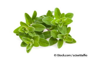 Used for Thousands of Years, Sweet Marjoram Oil Offers Many Benefits