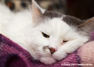 Desintoxicación de Mascotas