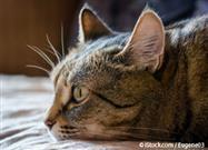 Vomito de Gato