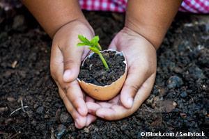 Como Cultivar Hierbas