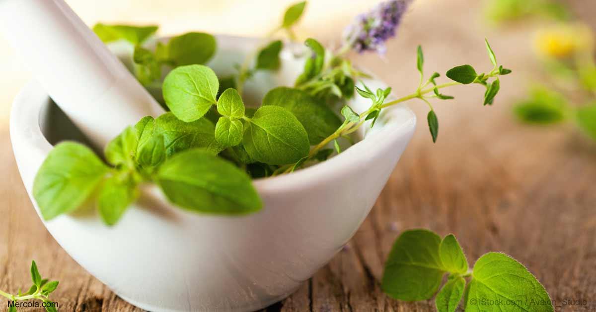 Herbal Oil Sweet Marjoram Oil Benefits And Uses