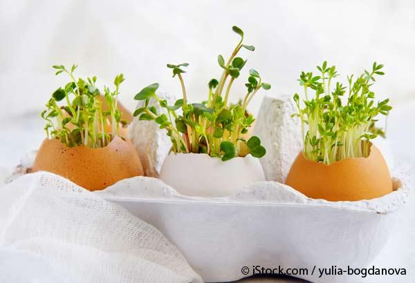 Hierbas en Cascaras de Huevo