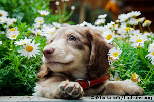 Plantas Venenosas para las Mascotas