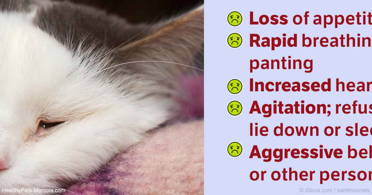 Cat Pain Relief | What to Do If Your Pet is Hurting