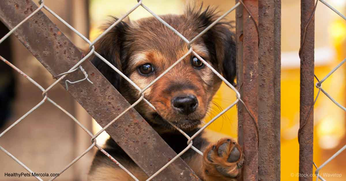 Puppy Mills Have More Behavioral Problems