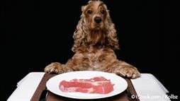 Alimentación Cruda para Mascotas