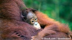 ape sanctuary