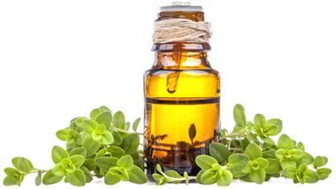 spanish marjoram oil
