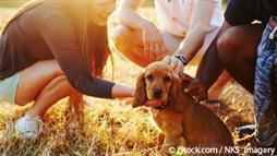 pet socialization