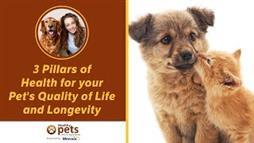 These 3 Pillars Hold Your Pet's Life and Longevity in Highest Esteem