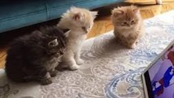 Kittens Watch Smurf Video