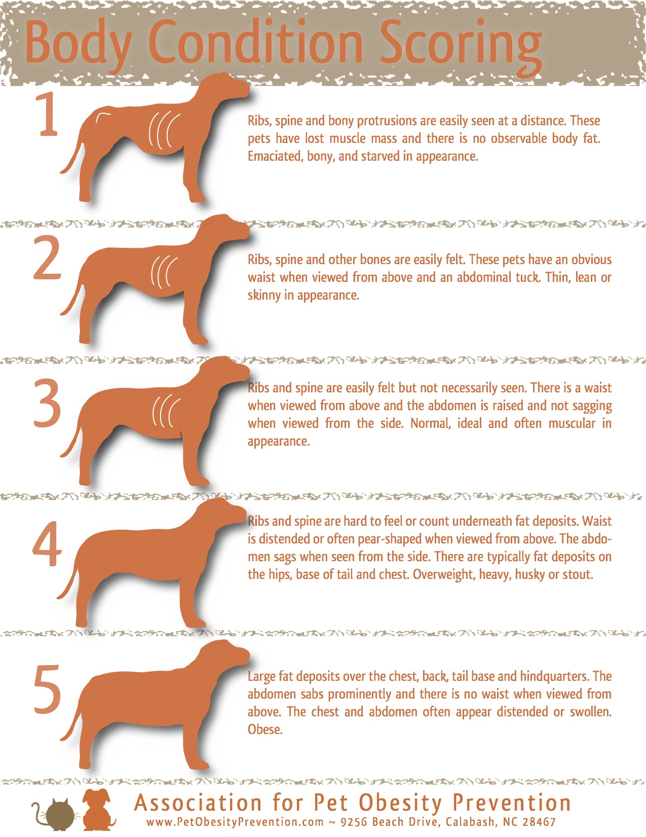 The top 10 obesity related diseases in dogs click here nvjuhfo Images