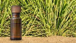 Palmarosa Oil: A Potent Way to Improve Skin Health