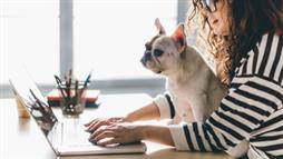 1 in 3 Employees Wish They Could Bring Their Pet to Work