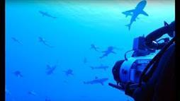 Filming Sharks in Protected French Polynesian Waters