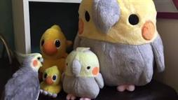 Alex the Cockatoo Talking to His Plush Friends