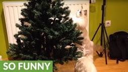 Cat-Proofing the Christmas Tree