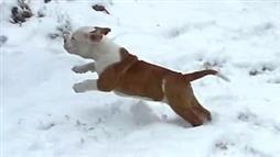 Puppies Responding to Snow