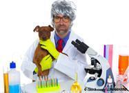dog genetic study