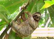 Why Do Sloths Live Life in Slow Motion?