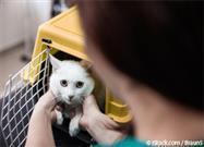 Veterinarios Para Gatos
