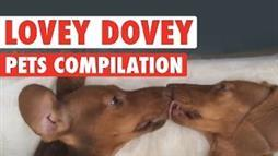 Lovey-Dovey Pets Compilation