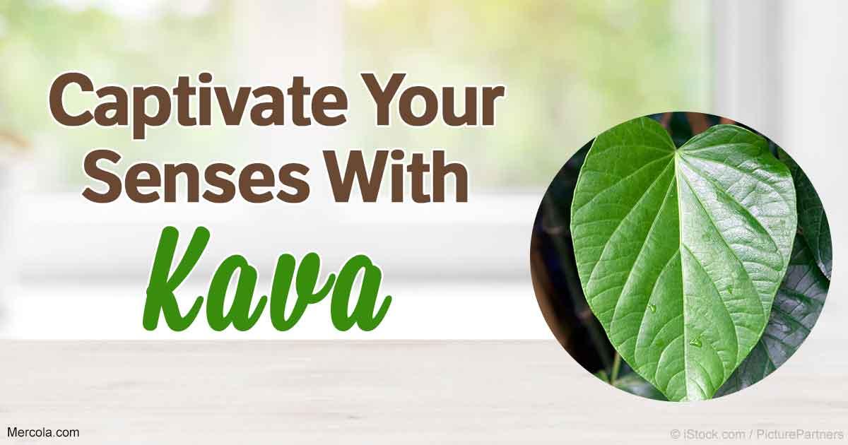 Kava: Benefits, Uses and Recipes