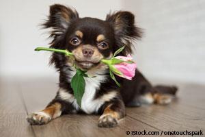 Día de San Valentín con Mascotas