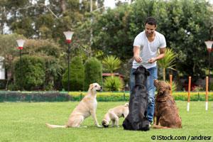 Entrenar Perros
