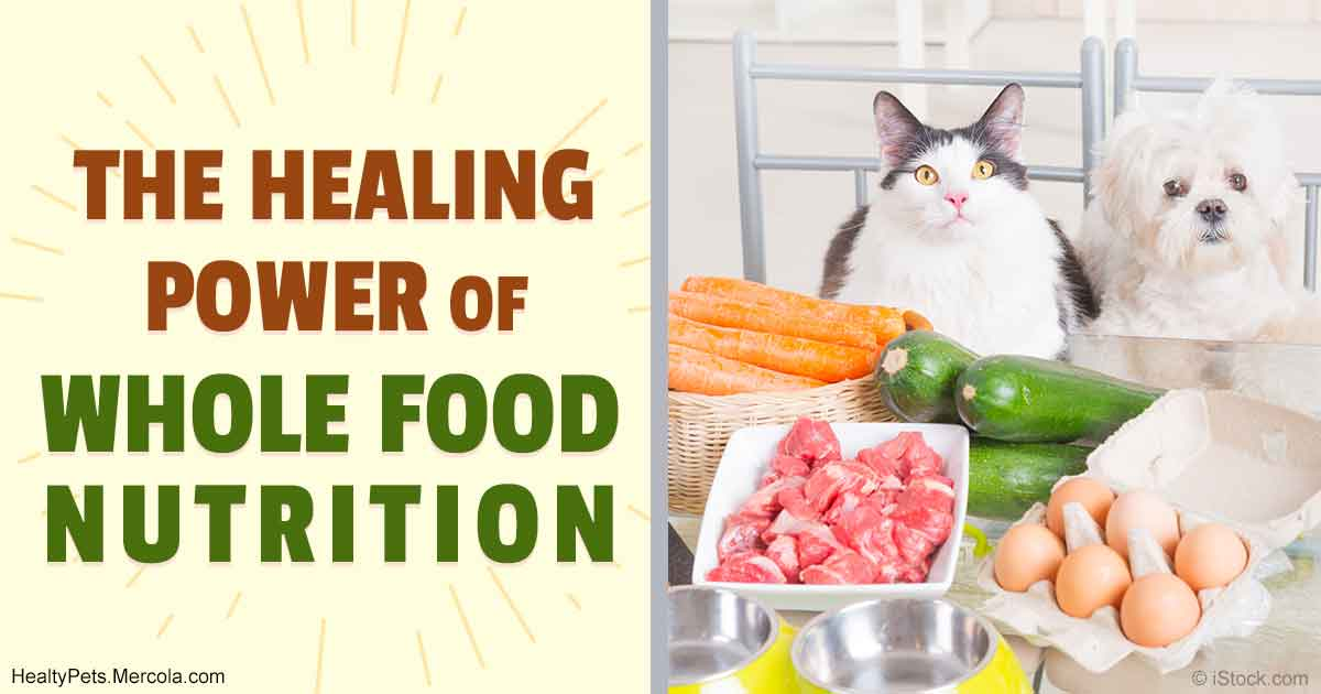 Whole food nutrition a healing prescription for pets for Cuisine for healing