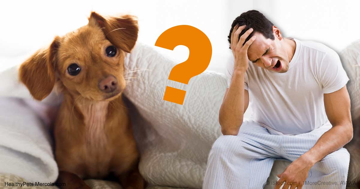 how to make your dog sleep at night