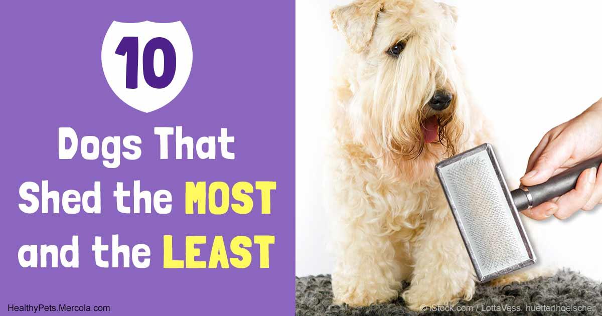 The Best Way To Manage Dog Shedding