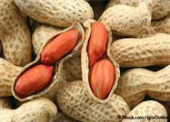 Updated Guidelines Call for Introduction of Peanuts During Infancy to Reduce Risk of Allergy
