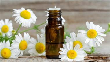 Calming Chamomile: Learn More About This Timeless Essential Oil