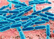 Bacteria Buena