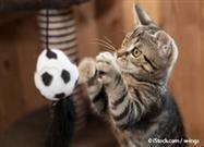 6 Creative Ways to Transform Your Cat Into an Indoor Athlete