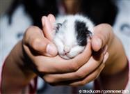 5 Etapas en la Vida de un Gatito
