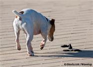 Por Qué los Perros Comen Popó
