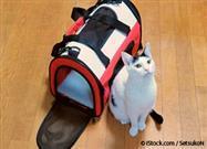 Viajar con Tu Gato