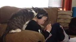 Kitty Loves His Boy... All Over Him!