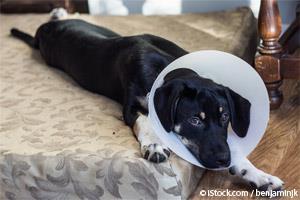 Esterilización y Castración Canina