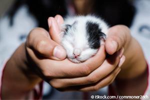 Etapas del Desarrollo de los Gatos