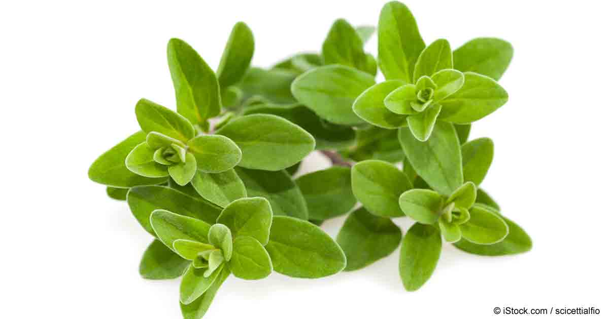 Marjoram: Benefits, Uses and Recipes