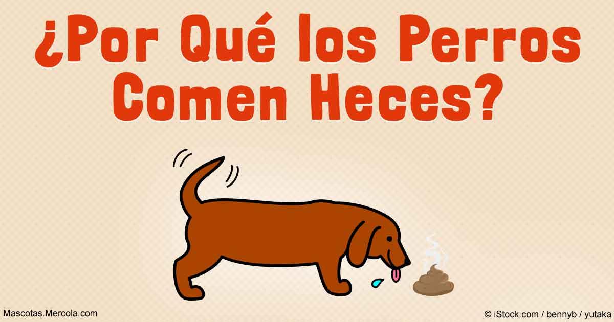 La Verdadera Razón Por La Cual Los Perros Comen Popó Y Cómo Detenerlos