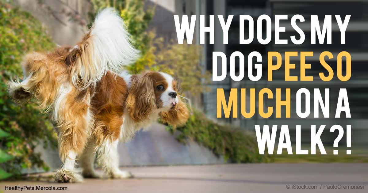 Why your dog incessantly sniffs and pees on walks m4hsunfo