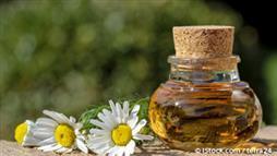 german chamomile oil